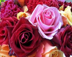 color roses    Download More Free Wallpaper Visit Freedesktopwallpaperz.net