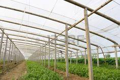 58787391-greenhouses.jpg (450×300)