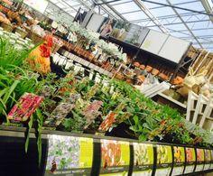 Een tafel vol met plantjes waar vlinders dol op zijn. Zet ze in je tuin en de vlinders komen zeker buurten!