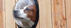 Pet Observation Porthole - LOVE!!    http://www.thegreenhead.com/2008/03/pet-observation-porthole-fences.php