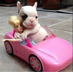 El blog de Monipeggy : Bulldog francés con Barbie