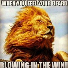 When you feel your beard blowing in the wind | Beard Meme | Beard Humor |