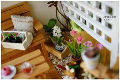 1/12陽台花園 flowers/plants