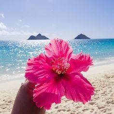 101 things to do in hawaii – ultimate hawaii bucket list – wanderlustyle Hawaii Flowers, Beach Flowers, Hibiscus Flowers, Tropical Flowers, Beach Aesthetic, Flower Aesthetic, Summer Aesthetic, Hawaii Pictures, Beach Pictures