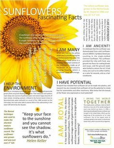 Sunflowers...Fascinating Facts