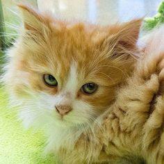 Trucos de hogar para las mascotas - Pinterest