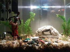 Teste de iluminação no aquário 03/agosto/2015