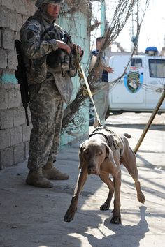 U.S. Army Staff Sgt. Robert Moore, from Elk View, Va., a Military Policeman of 1st Brigade Combat Team, 4th Infantry Division, and U.S. Army working dog Wisky attend the Kudus Medical Clinic grand opening in Muhallah 726, Beladiyat, eastern Baghdad,on Nov. 17, 2008. (U.S. Army photo by Staff Sgt. James Selesnick/Released)