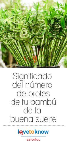 Feng Shui, Greenery, Floral, Santa Lucia, Relax, Bedroom, Vestidos, Lucky Bamboo, Bamboo Plants