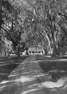 Over digitized photographs from the State Library and Archives of Florida. Vintage Florida, Old Florida, State Of Florida, Plantation Homes, Southern Homes, Southern Style, Florida Trees, Southern Plantations
