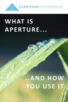 A free guide to Aperture in Photography. Learn what aperture is and how you can use it to transcend snapshot photos and create high-impact, wall-worthy photographs with blurred backgrounds.