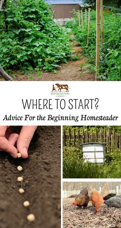 Permaculture is a philosophy, but it is also a practical guide for life. It gives us a range of design principles by which we can arrange our lives. Homestead Farm, Homestead Gardens, Homestead Survival, Farm Gardens, Homestead Living, Veggie Gardens, Survival Tips, Survival Skills, Homestead Layout
