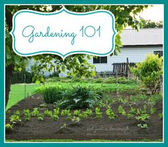 gardening-101