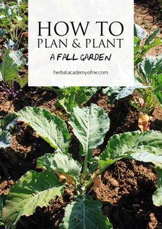 how to plan and plant a fall garden herbal academy