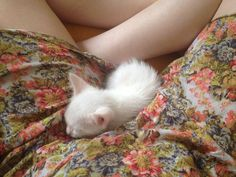 a lost ghost: Photo White Kittens, Cats And Kittens, Ragdoll Kittens, Tabby Cats, Funny Kittens, Bengal Cats, Black Cats, Baby Animals, Cute Animals