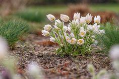 Blooming, beautiful white flowers.