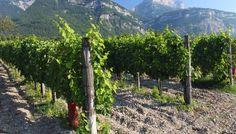 Des activités variées comme cette visite de vignoble Au Pas de l'Alpette http://bougerenfamille.com/vacances-chambery-en-famille/