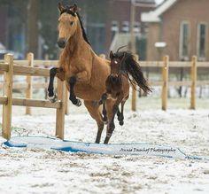 Photo by: Annie Damhof Photography Horseaddict