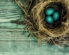 Nature Photography - natural history brown bird's nest on a sea of teal blue - Little Gems 11x14. $45.00, via Etsy.