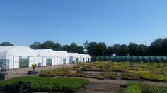 Nursery in the July sunshine #2016 #Hottestdayoftheyear