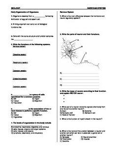 Worksheets On Nervous System For Grade 5 Kids Systems