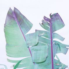 neon leaf