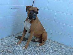 www.PetHarbor.com pet:SBCT.A472121