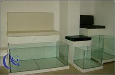 Garra Rufa Spa Tanks / Aquarium | Global Aquatics Inc - Genuine Wild Garra Rufa Fish