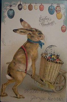 1905 Easter Bunny Postcard