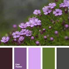 color green, color of malachite, color of young greens, green and purple color, jade color, light green color, light purple color, pale purple color, purple color, shades of green color, shades of purple color.
