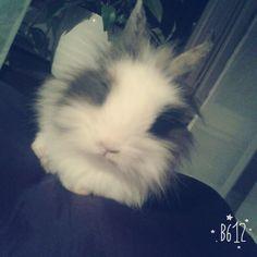 Pianka ❤❤ moj królik ;3