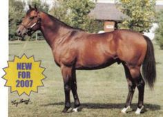 Prospect Bay(1992)Crafty Prospector- Baltic Sea By Danzig. 4x5 To Native Dancer, 5x5 To Crafty Admiral & Nasrullah. 7 Starts 4 Wins 2 SEconds 1 Third. $185,000. Won A Phenomenom S(G2), 2nd True North H(G2) 3rd Frank J Defrancis Memorial Dash(G2).: