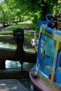 Sophie on Vox Stelarum in Lapworth Flight. By Gillie Rhodes. Barge Boat, Canal Barge, Canal Boat, Dutch Barge, Boat Interior, Lurcher, Floating House, Narrowboat, England