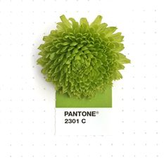 Pantone 2301 color match. A green button Pom Pom flower. I just love this green!