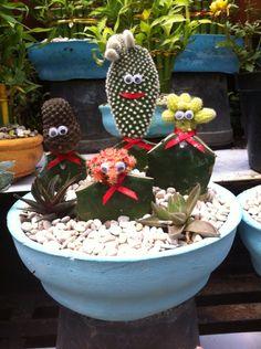 A cactus family X3