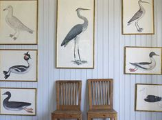 I <3 Birds.