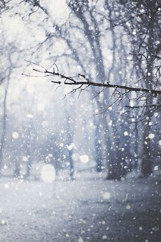 """snow falling soundlessly in the middle of the night will always bring my heart such clarity"" ~ Takemoto"
