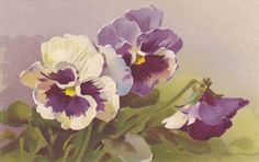 Purple & white pansies by C. Klein