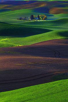 Spring Palouse Patterns, Steptoe Butte State Park, Eastern Washington