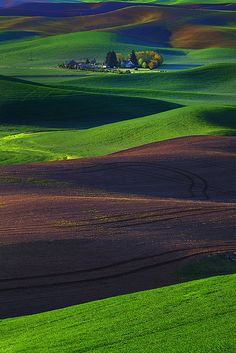 Spring Palouse Patterns, Steptoe Butte State Park, Eastern Washington