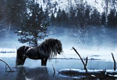 ✰Awesome Black Horse Winter✰ - view, Seasons, fog, lake, Holidays, mist, black horse, trees, animals, forests, snow, art, frosty, amazing, splendor, quiet, reflection, alone, silent, Nature, black and white, ice, awesome, lonely, Horses, wonderful, Winter, scenery, Painting