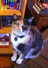 Mabel from Moby Dickens Bookshop  From Abe Book's Gallery of Bookstore Cats. www.abebooks.com/books/bookseller-bookshop-bookstore/cats.shtml