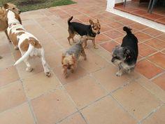 Ratos en casa con Benita, George, Richie, Brown y Chico 01/17