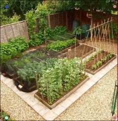 Discover the 4 most productive vegetable garden layout for backyard gardeners. Discover the 4 most productive vegetable garden layout for backyard gardeners. Whether you& got a small yard or acres to grow, you& find the perfect. Small Garden Fence, Raised Garden Bed Plans, Small Space Gardening, Large Backyard, Small Garden Plans, Corner Garden, House With Garden, Raised Bed Gardens, Garden Ideas For Small Spaces