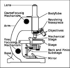 Parts of a Microscope Worksheet | Cheap Part Of A Microscopes ...