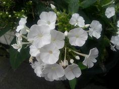 동네골목에 피어있는 꽃