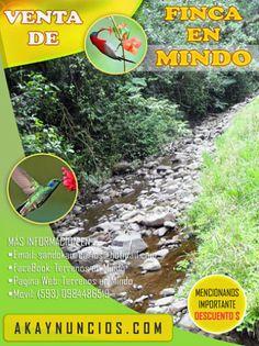 Hermosa Finca de venta en MINDO - Pichincha - Ecuador #AllyouneedisEcuador