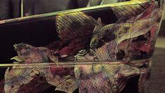 #Magazine - #Desgin : Luxe, design et volupté, Geisha #OraIto par #HomNguyen