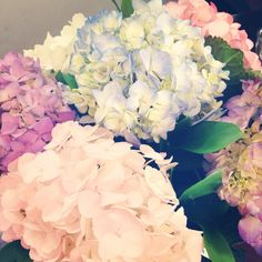 Hortensias - I have one bush would like a few more