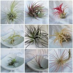 3 Months of Air Plants